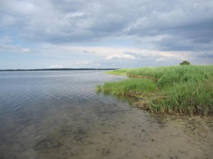 Anders als die Küste zur offenen See mit ihren Stränden sind die Bodden von dichtem Schilf umgeben. Im Sommer bilden sie ein Grünes Band entlang der Ufer.