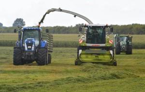 Weideflächen im südlichen Bereich des Kubitzer Boddens werden dreimal im Jahr abgeerntet.