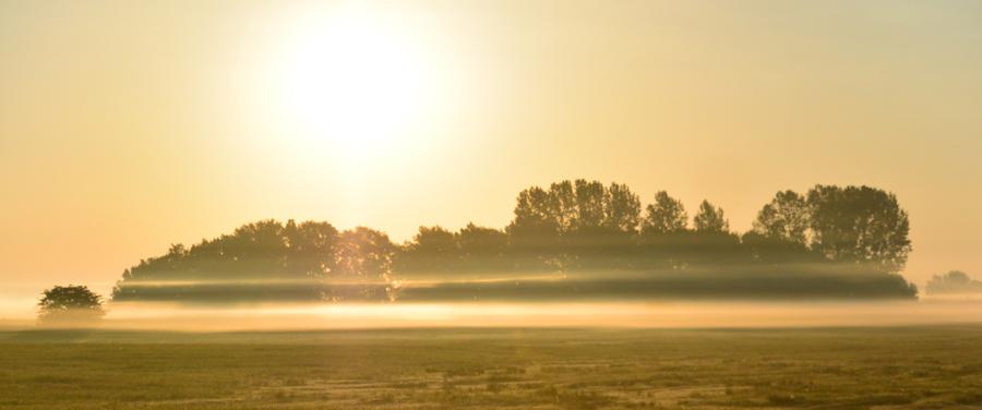 Wenn die Morgensonne den Tau der Nacht auflöst, entdeckst Du am Kubitzer Bodden die Poesie einer Landschaft.