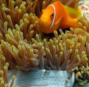 Palmen am weißen Sandstrand. Im türkisfarbenem Wasser tummeln sich exotische Fische. Die Insel ist in Literatur und Musik fast der Inbegriff des Transzendentalen. Foto: Margit Völtz, pixelio.de