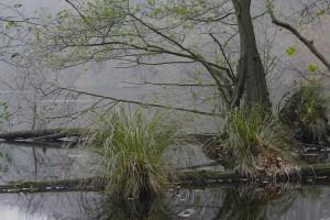 Natur sich selbst überlassen: So entwickeln sich im Nationalpark Jasmund eindrucksvolle Landschaftsbilder.
