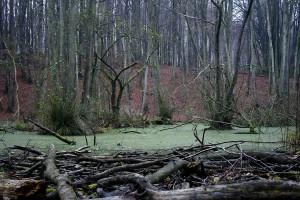 Wenn aus den Tümpeln das Wasser abfließt, bildet sich Torfboden. So entstanden die Moore im Naturpark.