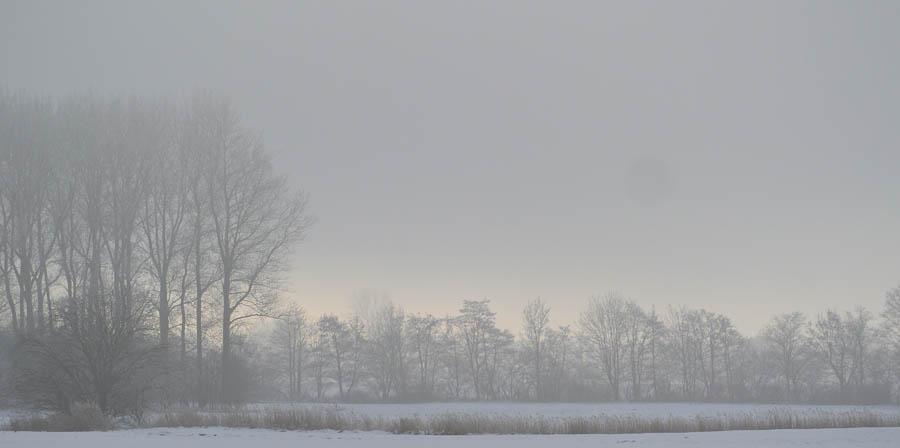 2015_02_06__Kubitzer Bodden_42_ Waldrand im Nebel_wp