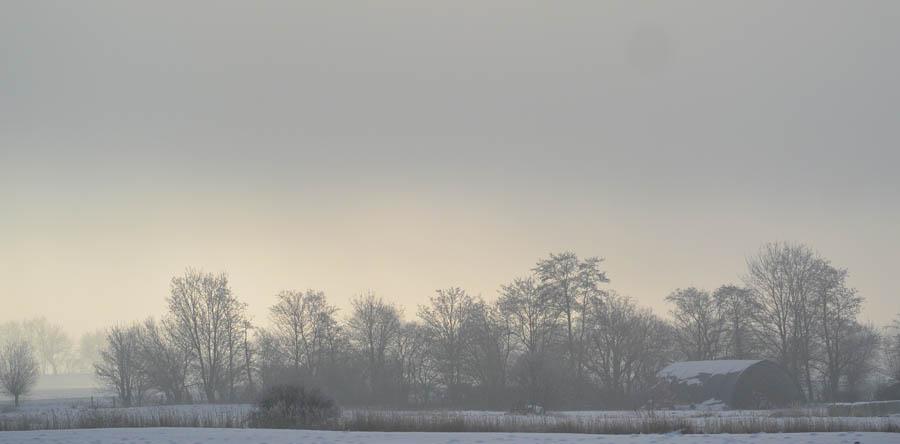 2015_02_06__Kubitzer Bodden_45_ Waldrand im Nebel_wp
