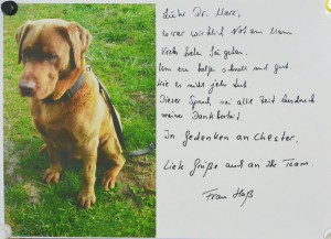 Der Dankesreim mit dem Foto des verendeten Labradors hängt beim Tierarzt an der Pinnwand.
