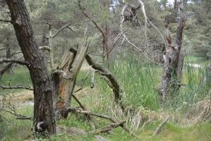 Seit 1991 wird der Bug nicht mehr militärisch genutzt. Die Gebäude wurden dem Boden gleich gemacht. Die ökologische Sanierung begann im Jahr 2001. Heute gehört das Gebiet zur Schutzzone 1 des Naturparks Vorpommersche Bodenlandschaft und darf nur mit Sondergenehmigung betreten werden. Geführte Wanderungen bietet das Fremdenverkehrsamt Dranske, Telefon 038391 89007