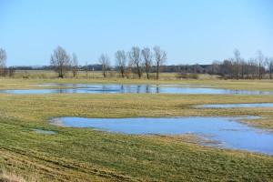 Auch heute bilden sich große Wasserlachen am Kubitzer Bodden – allerdings nur im Winterhalbjahr, wenn die natürliche Verdunstung fehlt und das Wasser im Boden bleibt.