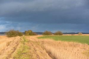Bevor der Deich angelegt wurde, waren die Flächen im Uferbereich des Kubitzer Bodddens Küstenberflutungsgebiet. Durch Wechsel von Nässe und Trockenheit bildete sich eine einzigartige Vegetation heraus.