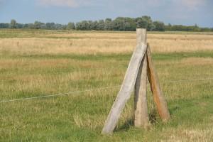 Das Wiedervernässungs-Projekt am östlichen Kubitzer Bodden mutierte in diesem Sommer zur Trockenzone. Weil die Rinder auf der Weide nicht mehr ausreichend Nahrung fanden mussten sie zurück in den Stall und wurden inzwischen verkauft.